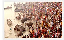 Sonepur Cattle Fair